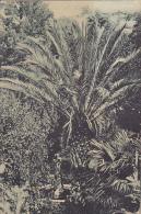 D4  --  DUBROVACKA RIVIERA  --  VILA BATAHOVINA   --  1920  /  VERIGARI, CHAINBREAKERS STAMP - Kroatien