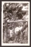 TR12) Men Picking Bananas - Real Photo Postcard - Trinidad
