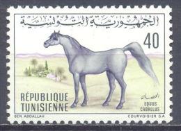 Tunisie YT N°661 Cheval Neuf ** - Tunisia