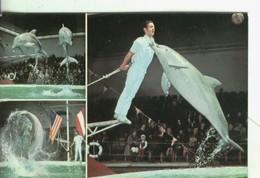 Postal 004348 : Florida  Delphin Show, Tourner Oficial Por España - Cartes Postales