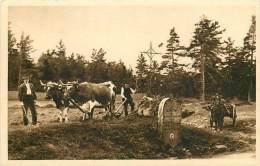 63 SAINT ANTHEME Vaches Charrues Paysans Cheval Borne Limite Départementale Ed L. Bachet Ambert N° 2031 - Autres Communes