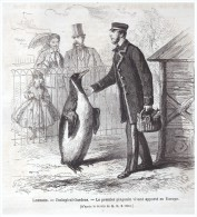 GRAVURE D Epoque    1865...londres   Le Premier Pingouin    Zoo Zoological Gardens  L - Vieux Papiers
