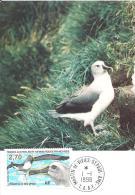 (L 245) TAAF 1998 Albatros à Tête Grise Sur Carte Premier Jour (N° Yvert 229) - Lettres & Documents