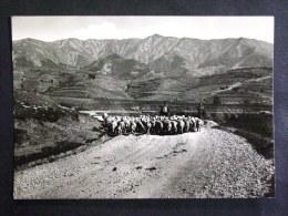 ABRUZZO -L'AQUILA -POGGIO CANCELLI -F.G. LOTTO N°343 - L'Aquila