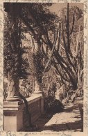 Monaco  -  Les Jardins Exotiques.   .  S-379 - Exotic Garden