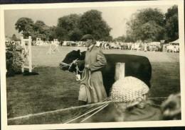 Privat Photo Pic. Horse Show Race Bull Show Alton Hampshire 1960 Rare - Sports