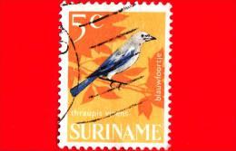 SURINAME - USATO - 1966 - Uccelli - Birds - Oiseaux - Thraupis Virens - 5 - Suriname ... - 1975