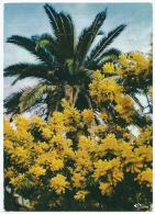 3 PP 73 0080 - COTE D´AZUR - Végétation Méditerranéenne - Palmier Et Mimosa - Circulée 1984 - Scan Recto-verso - Provence-Alpes-Côte D'Azur