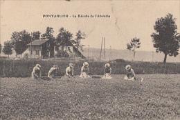 PONTARLIER            LA RECOLTE DE L ABSINTHE - Pontarlier
