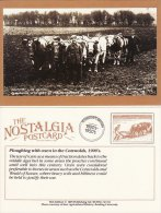 Postcard Ploughing With Oxen Snowshill Cotswolds 1900's Nostalgia Plough Farm Repro - Cultivation