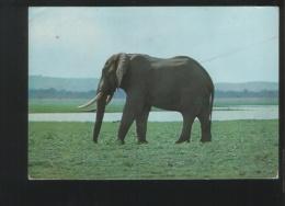 MOZAMBIQUE - Elephants