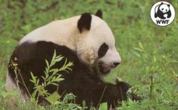 TELECARTE  MALAWI 100  WWF  Panda ***** - Malawi