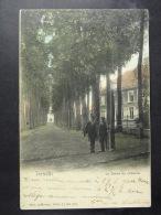 Ternat La Drève Du Château (colorisée) - Ternat