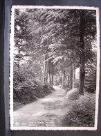 CP. 517. Orroir. Mont L'Enclu Sous-Bois. - Mont-de-l'Enclus