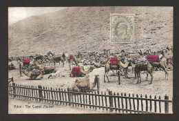 Aden - The Camel Market - 1912 ( K 1374 ) - Yemen