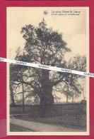 Le Vieux Chêne De LIERNU - Eghezée