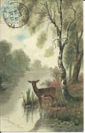 Biche Et Faon En Forêt - Sonstige