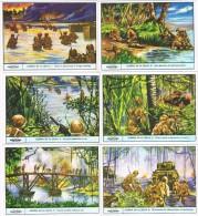 6541. Serie Completa 6 Cromos  GALLICROMO, Serie 12, Guerra En La Selva - Historia
