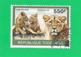 REP. TOGOLAISE ,,, PANTHERA  LEO  ,,, **  550 F. ** POSTE  2010  ,,, TBE - Togo (1960-...)