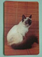 Cat / Kat / Chat 1993 ( Russia Sovjet Unie / 92-5689 ) ( Format 9 X 6 Cm - Zie Foto´s Voor Détails ! - Calendarios