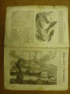 21 Nov. 1833 MAGASIN UNIVERSEL: Gibraltar ;Hirondelles(des Fenêtres,des Rivières,de Cheminée); Les Chapeaux D´hommes ; - Zeitungen