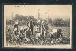 6258 - 29 - PLOUGASTEL DAOULAS : Cueilleurs De Fraises - Plougastel-Daoulas