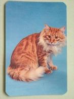 Cat / Kat / Chat 1993 ( Russia Sovjet Unie / 92-5689 ) ( Format 9 X 6 Cm - Zie Foto´s Voor Détails ! - Calendars