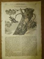 13 Fev. 1834  MAGASIN UNIVERSEL: Coucou Et Le Pic;Tour De LONDRES (grav. Et Doc);Costumes Militaires Des Français - Zeitungen