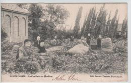01563a Poperinghe-Poperinge - la Cueillette du Houblon