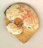 2 Ammonites  Aalénien ( Belmont France ) 6 X 5 Cm Et   5,5 X 4,5 Cm Belles  Sutures Visibles - Fossiles