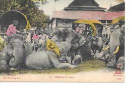 LAOS - Eléphants Au Repos - Laos