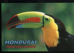 L6969 PAPPAGALLO / PARROT - Birds