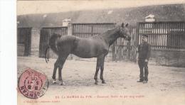 LE HARAS DU PIN HOMEWOOD ETALON PUR SANG ANGLAIS - France