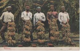 RECOLTE DE LA BANANAS - Panama