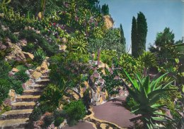 Jardin Exotique De Monaco  -  L`Allee  Des Aloes   A-1868 - Exotic Garden