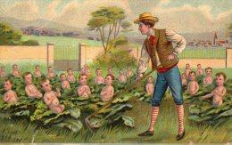 Illustrée Glacée : Comment Arrivent Les Bébés ...  Le Jardinier Sarcle Ses Choux - Children And Family Groups