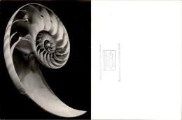 Photokunst Muschel Spirale ? - Other