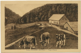 Ferme Straessel Vosges D Alsace Paturages  Edit Kuntz Soultz - Sonstige Gemeinden