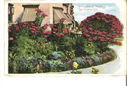 Poinsettias In Winter, Los Angeles, California - Flowers, Plants & Trees