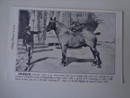 CPA CHEVAUX POSTIER BRETON 1912 ISIAQUE - Chevaux