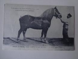 CPA CHEVAUX ALEZAN 1906 VAS Y VOIR St Pol De Leon - Chevaux