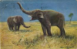 Olifant  -  Elephant     ------ 2 Scans - Éléphants