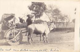 INDE  / 1912 / TRES BELLE CARTE PHOTO D UN MEDECIN / ATELAGE / DELHI - Inde