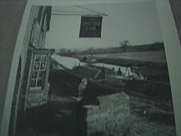 Magazine Cutting Undated The Spotted Cow Farnham - 1900-1949