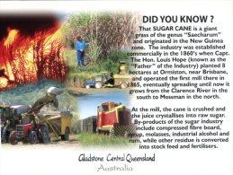 (930) Australia - Did You Know - QLD - Gladstone Sugar Cane - Cultures