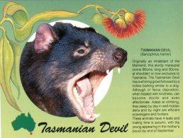 (930) Australia - Did You Know - Tassie Devil - Animaux & Faune