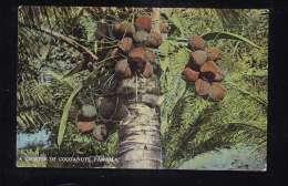 PA-45 A CLUSTER OF COCOANUTS PANAMA - Panama