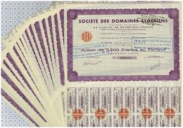 Lot De 36 Actions De La Société Des Domaines Algériens - Afrique