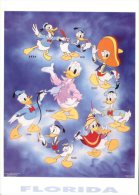 (988) Disney - Donald Duck - Disneyworld