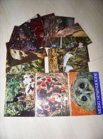10 Post Cards From Lithuania 1979 Birds Oiseaux Owl Stork Eagle - Vögel